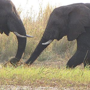 6. Chobe National Park, Bostwana