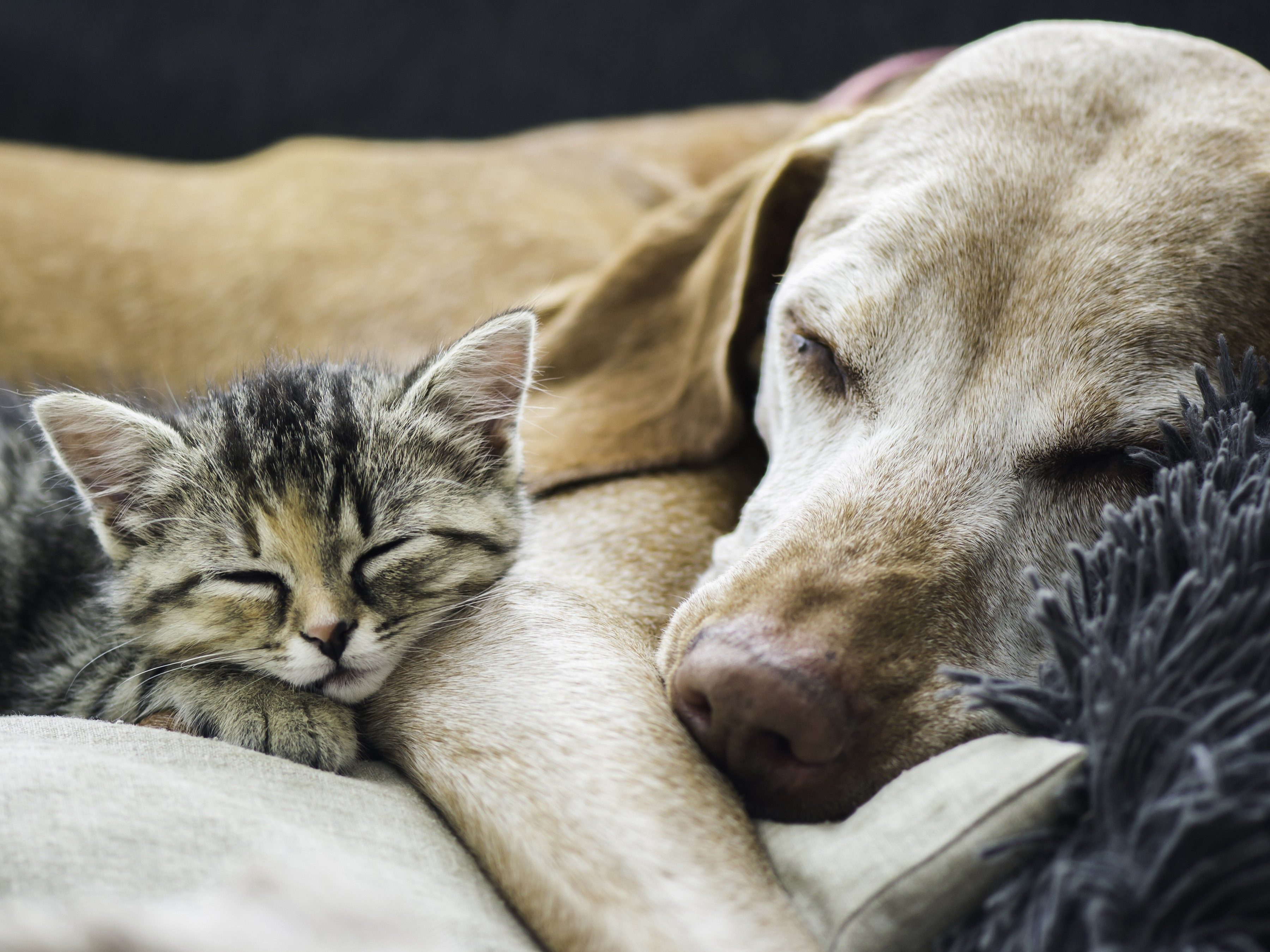 Which dog and cat vaccinations are absolutely essential?