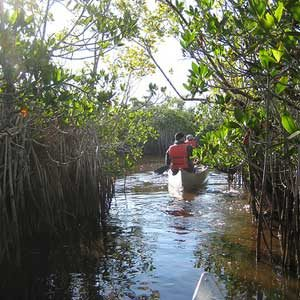 Florida Vacation Ideas: Everglades National Park