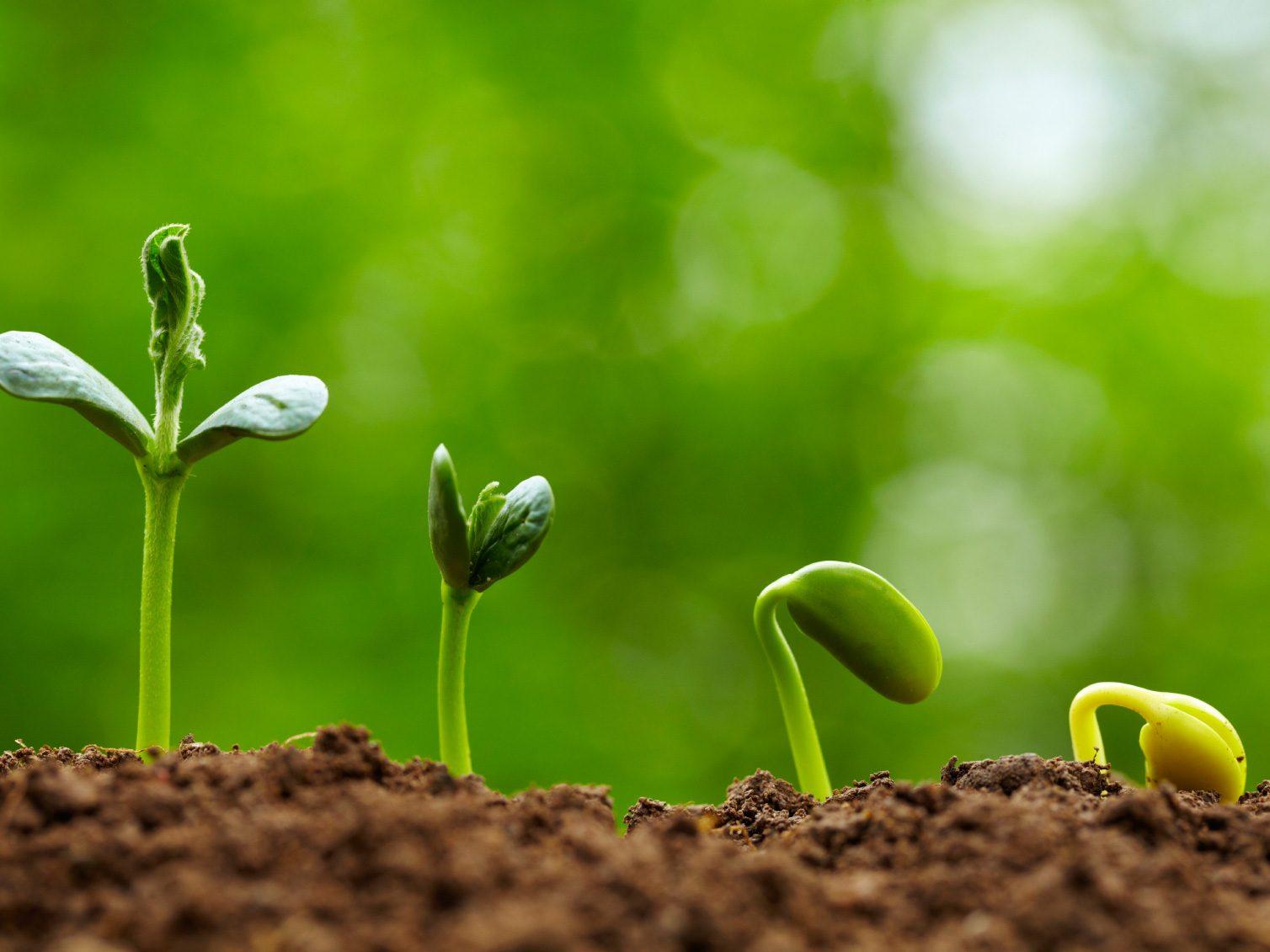 How to Build Fertile Soil