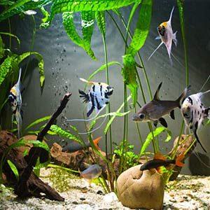 Freshwater Tip #1