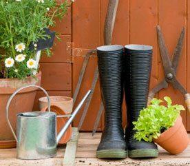 Oct-Nov Backyard Garden Checklist