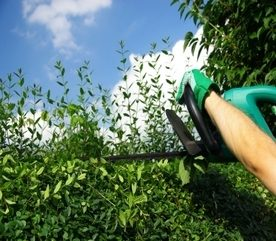 Landscaping Ideas for a Greener Garden Next Spring