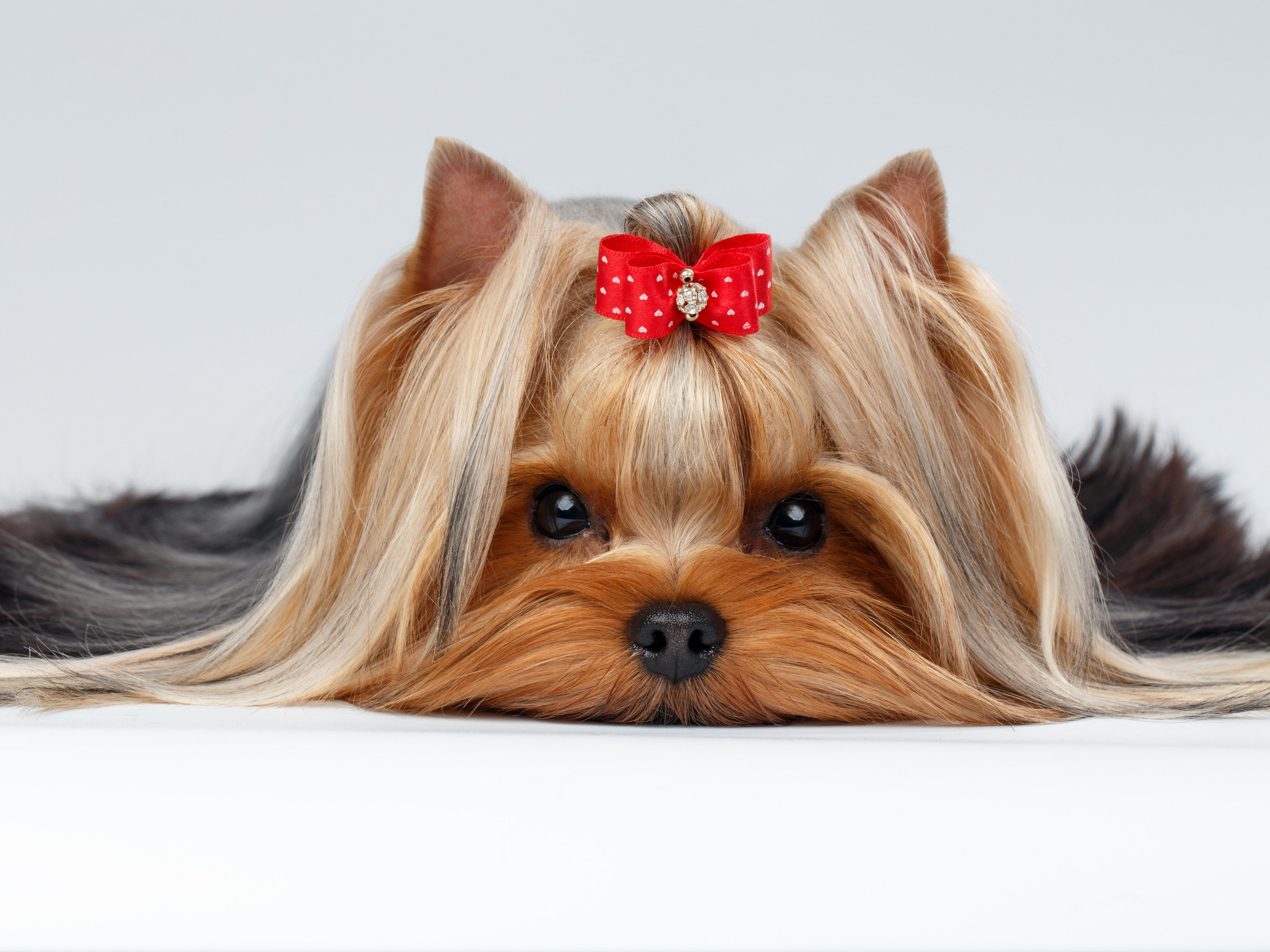 8. Be prepared to groom your dog
