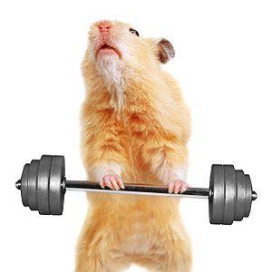 5 Animalympics Pet Videos