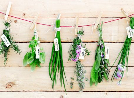 Lemon Balm, Rosemary, and Other Herbs