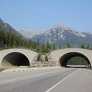 7. We Have the World's Safest Highways (for Animals)