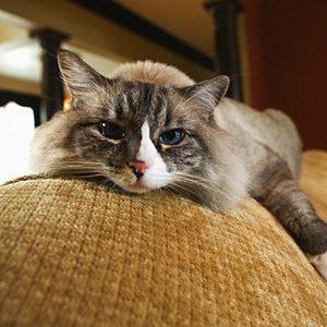 4. Cats Live Longer, Healthier Lives Indoors