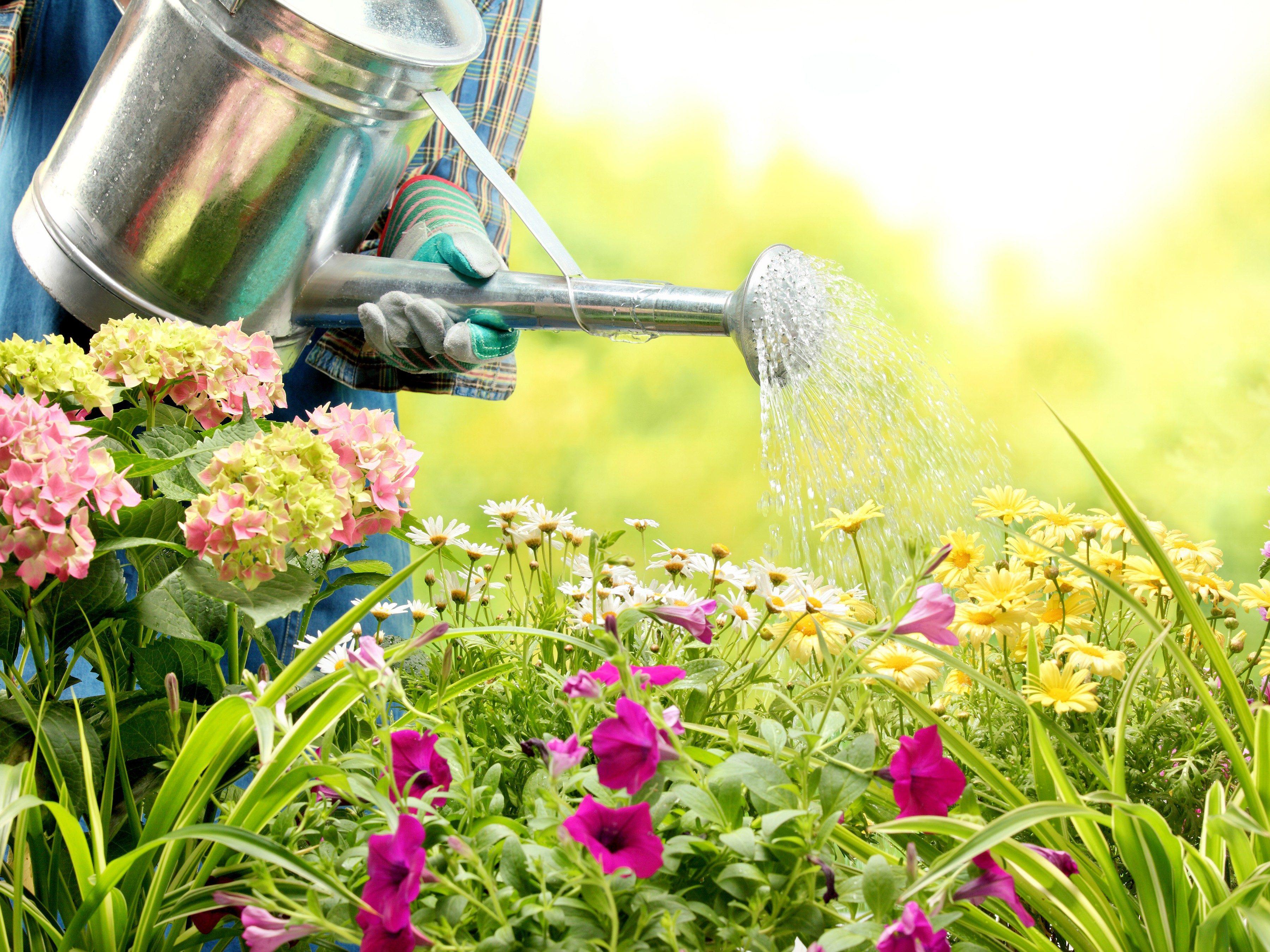 Perfect Garden Step 1: Make a Plan