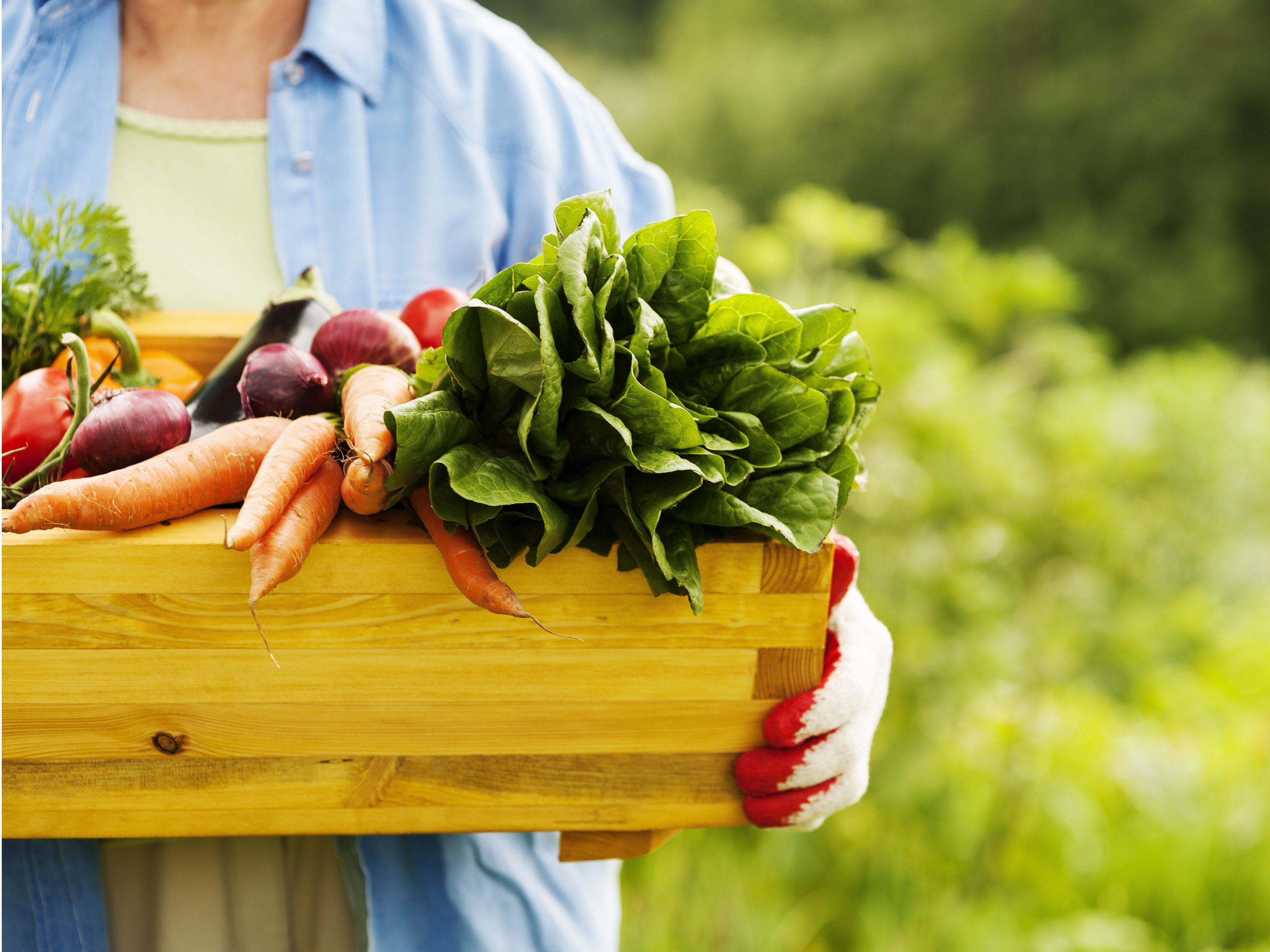 Find a Sunny, Open Site for Your Vegetable Garden