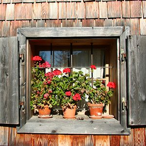 2. Create a Sun Box for Plants