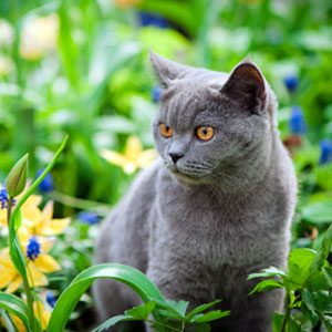 What Does Grey Fur Say About Your Cat?