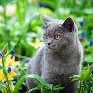 5. Strange Cat Behaviours: Why Do Cats Act Up?