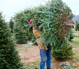 3. Cut Down Your Own Christmas Tree