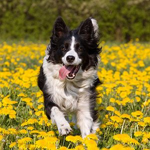 How to Maintain a Healthy Dog: Offer Frequent Exercise