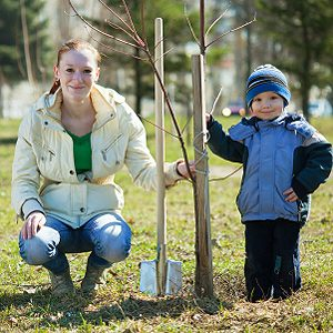 8. Protect Young Trees with Paper