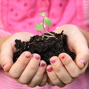 Use Sun Boxes for Veggie Seedlings