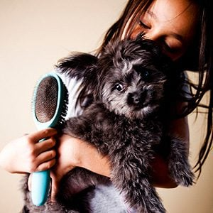Keeping Your Dog Healthy: Brush Regularly