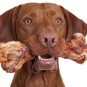 How to Preserve Your Dog's Health: Give Your Dog a Bone