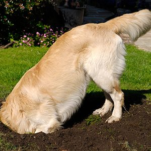 Problem: Your Dog Repeatedly Digs Up the Same Spot in the Yard