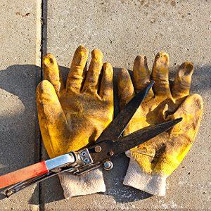 6. Clean Sap Off Tools