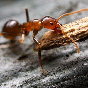 1. Keep Ants Away