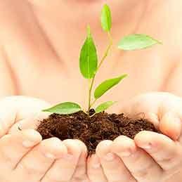 Start seedlings