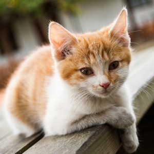 Know Your Cats: Their Hearts Are Racing