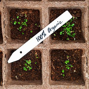 5. Make Easy-Free Plant Markers