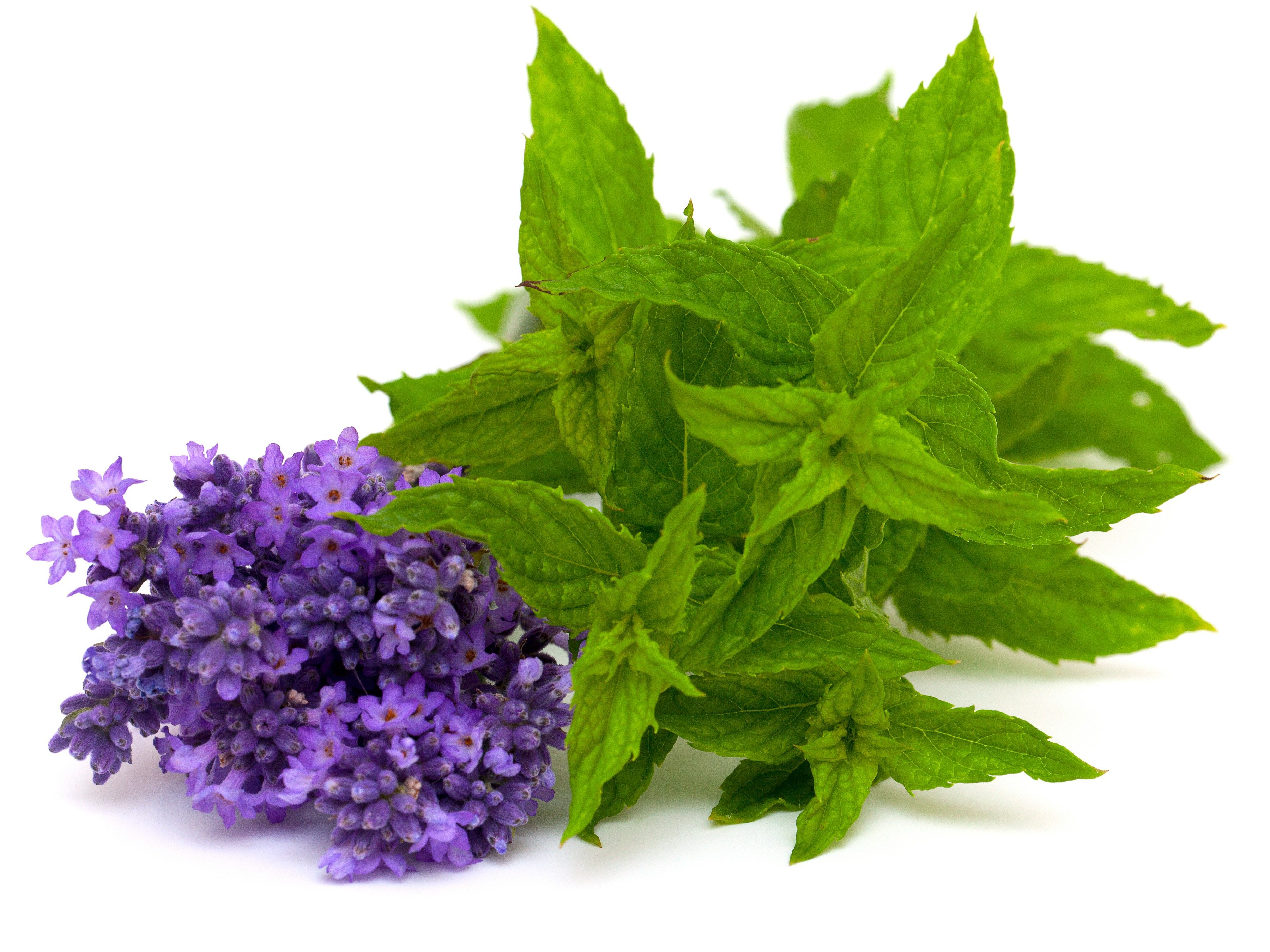 3. Peppermint and lavender essential oils