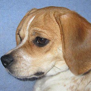 Miss Ellie Mae Sparkle, Pugle