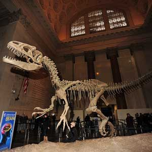 Easy-on-the-Wallet NYC Must-Sees: American Museum of Natural History