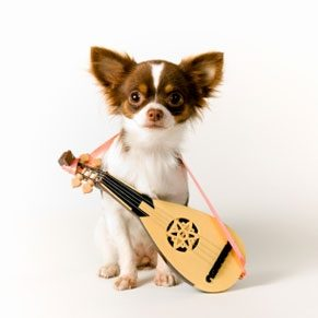 5 Musically Talented Animals