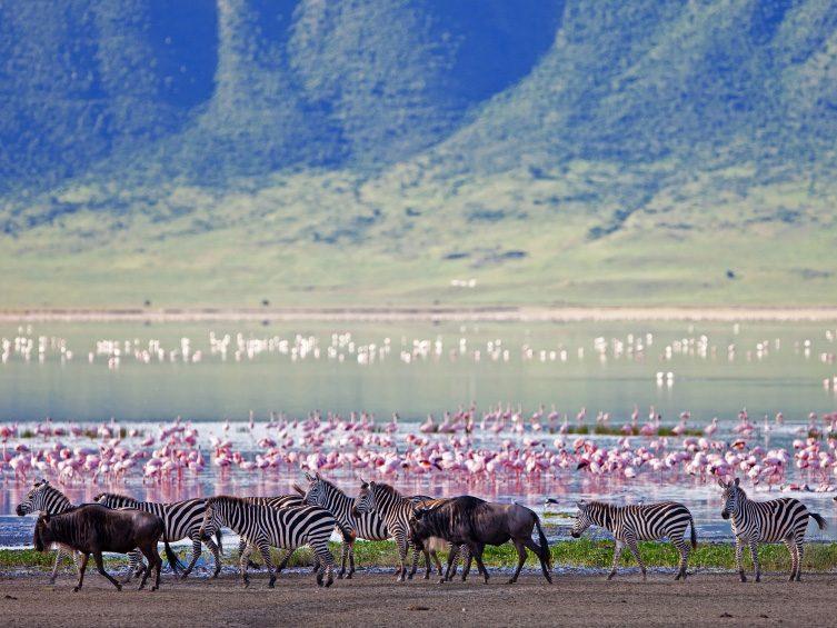 Explore the Ngorongoro Conservation Area in Tanzania