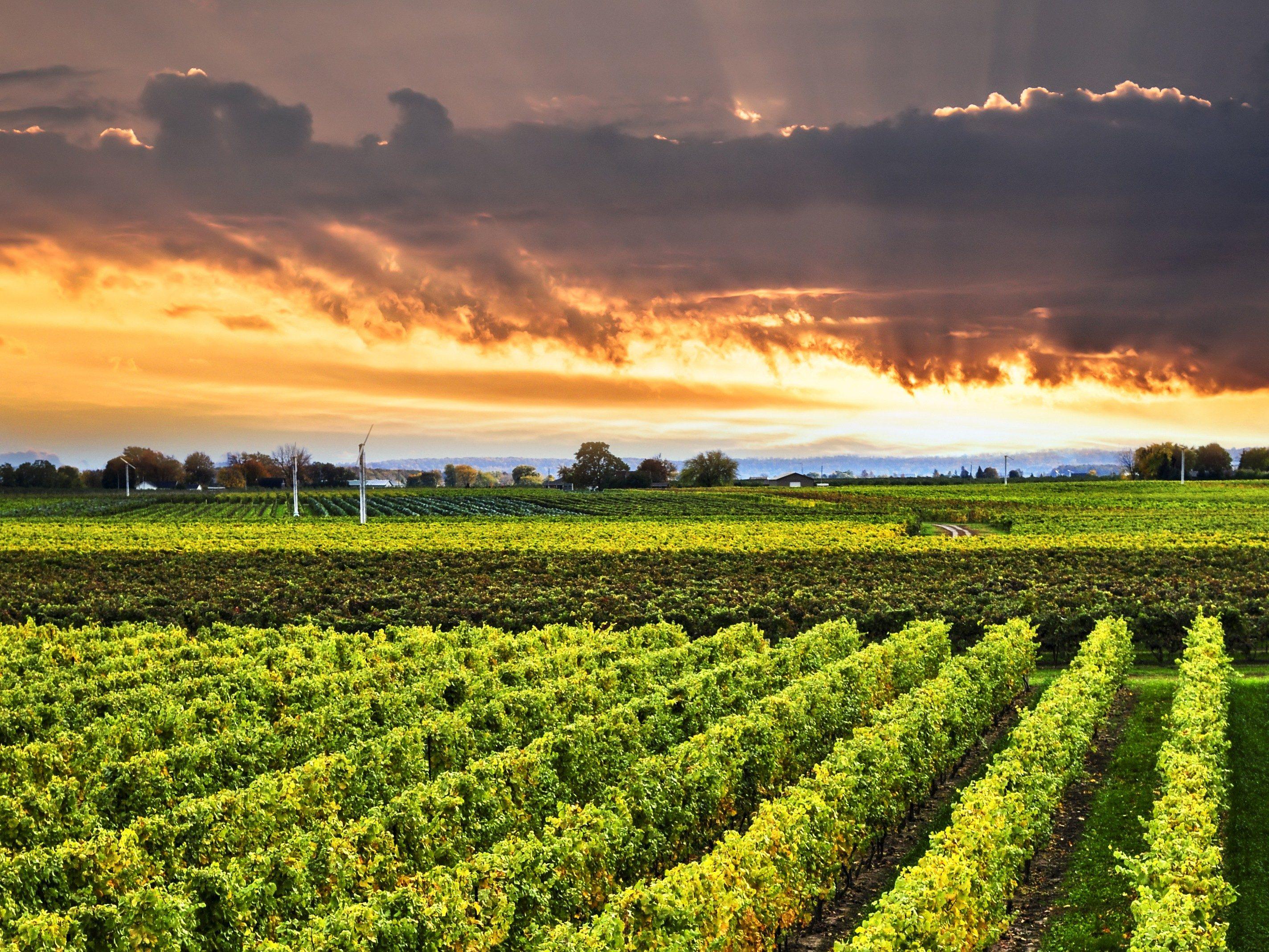 Niagara Wine Country, Ontario