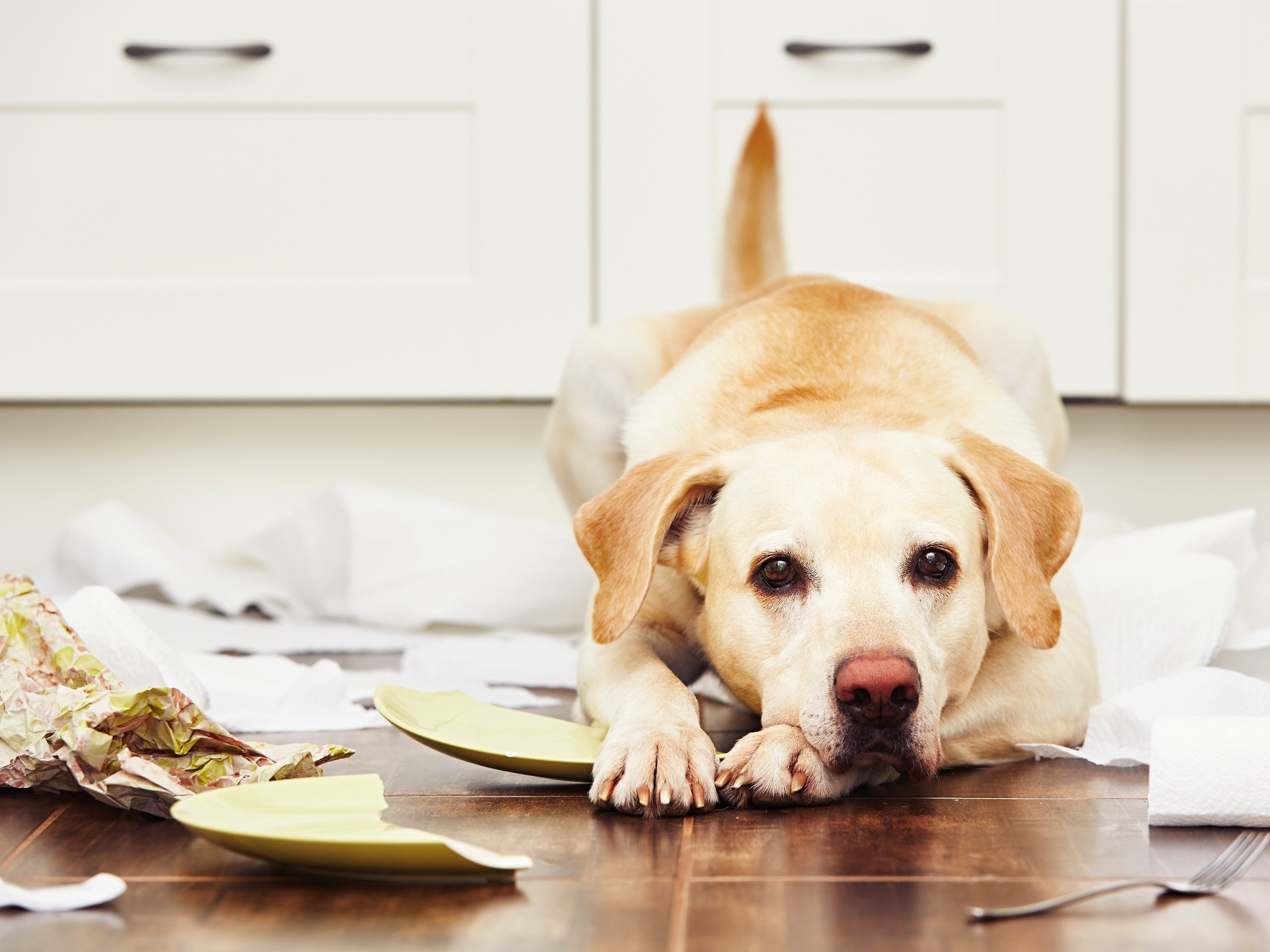 2. Owning a dog can be expensive