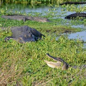 Reasons to Visit Florida: Paynes Prairie Preserve