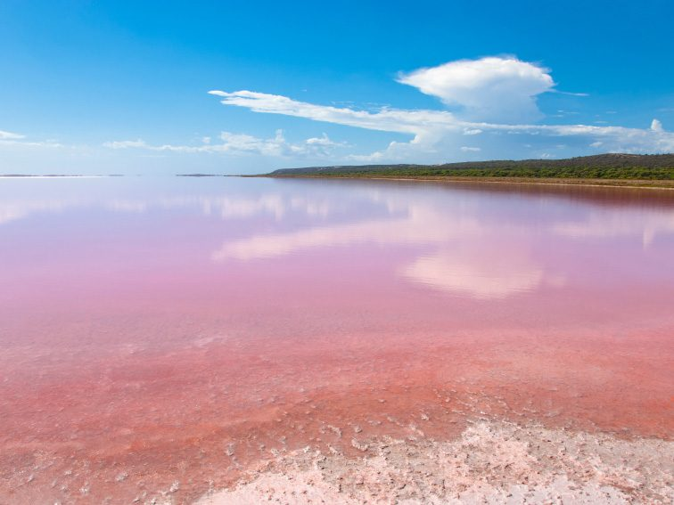 Visit the Pink Lake in Australia