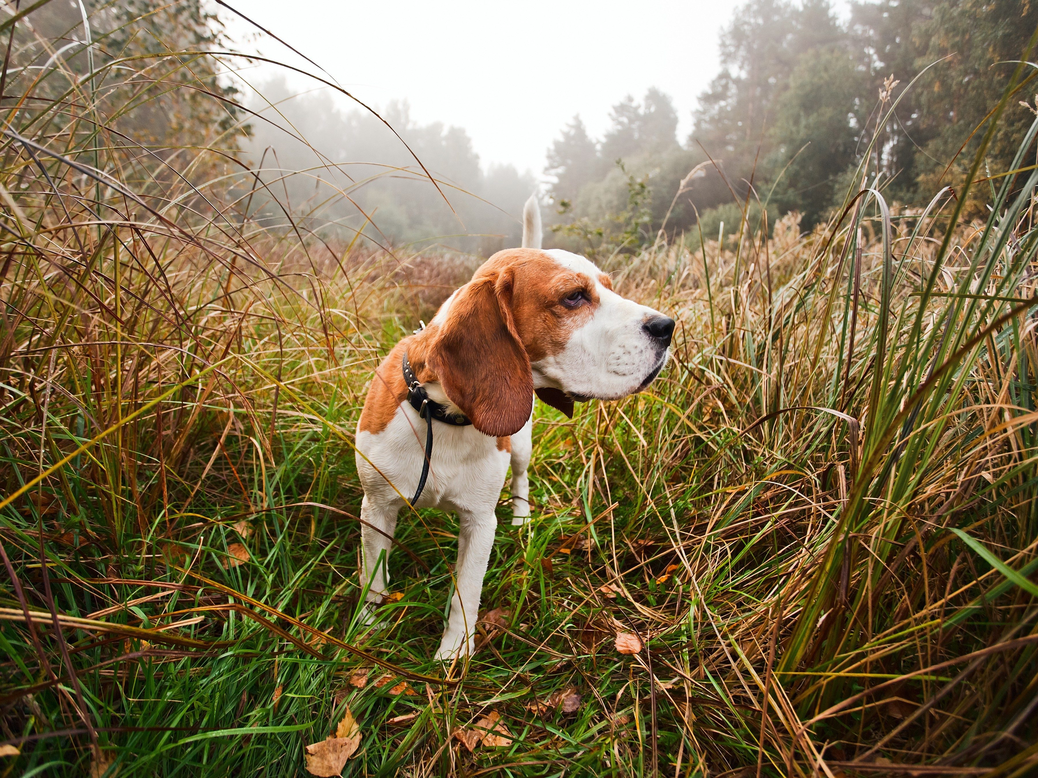 4. Plan a Treasure Hunt for Your Dog