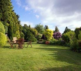Landscaping Basics: Planting Trees, Shrubs & Hedges