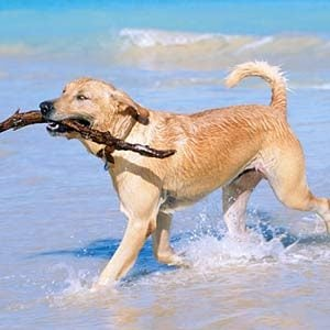 5. How To Tell if Your Dog is Playful