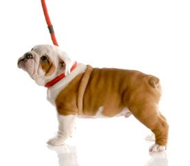 Dog Training Collars: What You Need to Know