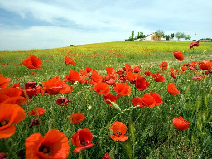 Remembering Canada's War Dead