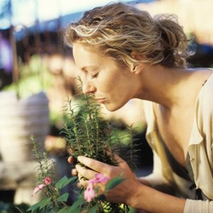 12. Benefit From the Scent of Rosemary