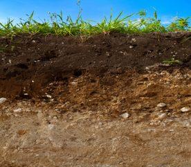 Landscaping Basics: Understanding Your Gardening Soil