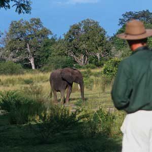 9. Safari in Tanzania