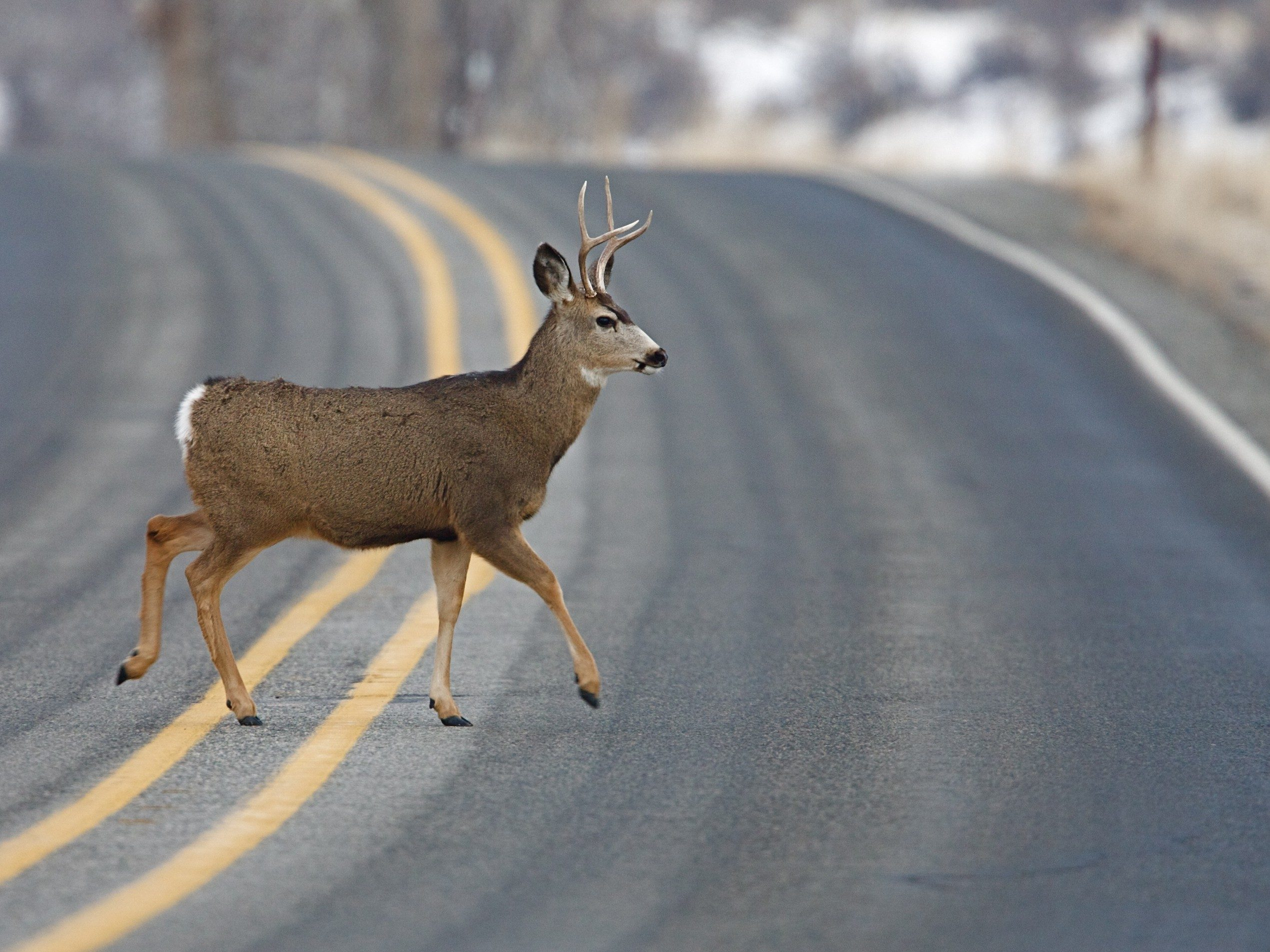 Driving tip #10: Watch for wildlife.