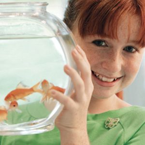 Buy The Right Home For Your Fish