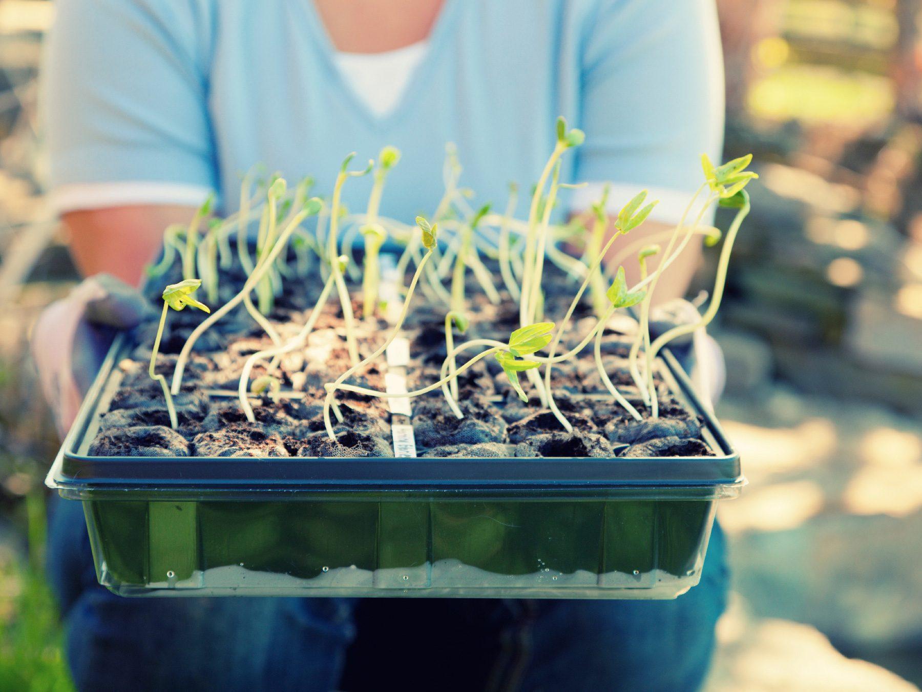 Get Gardening Early
