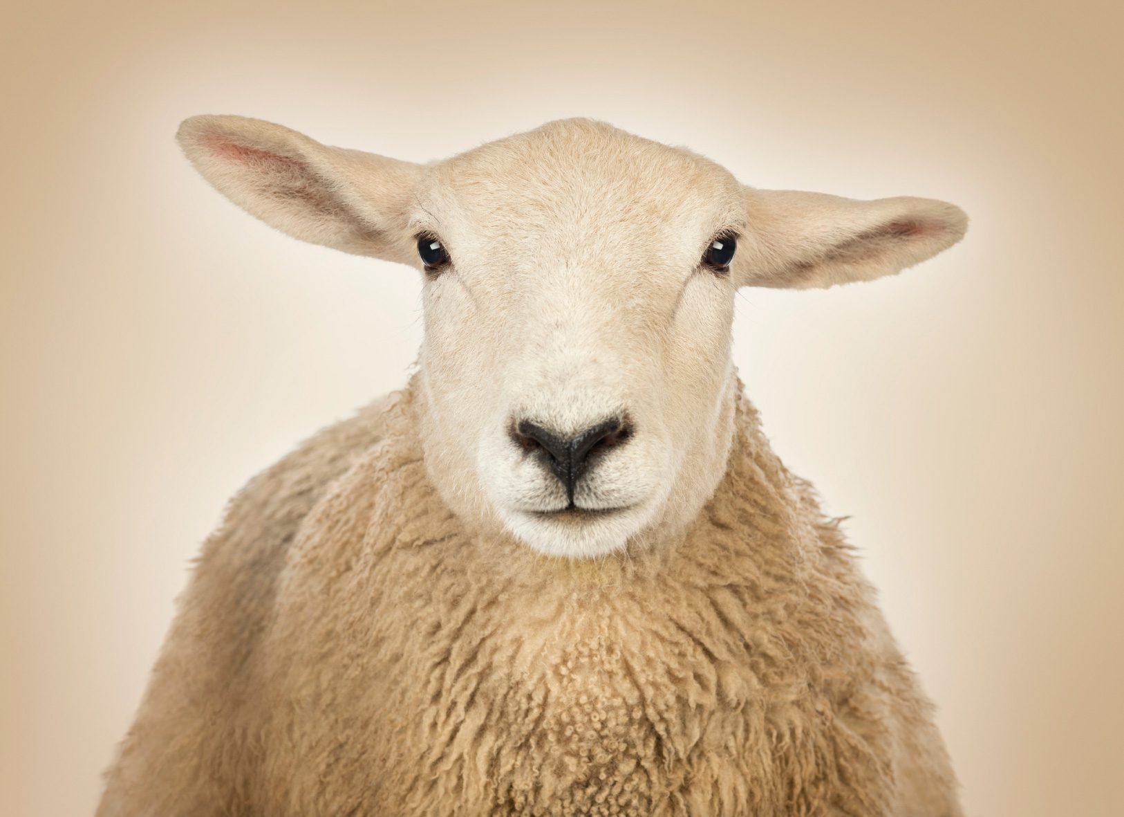 Want to Promote Sleep? Don't Count Sheep